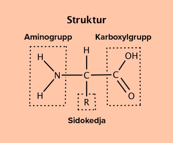 proteiner1